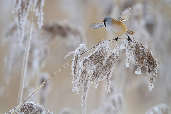 Номинация: «Птицы». Автор: Марк Вэбер. Название: Канатоходец