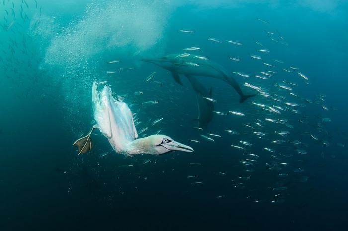 Автор: Александр Сафонов. Название: «Инь и янь».  Номинация: «Подводный мир»