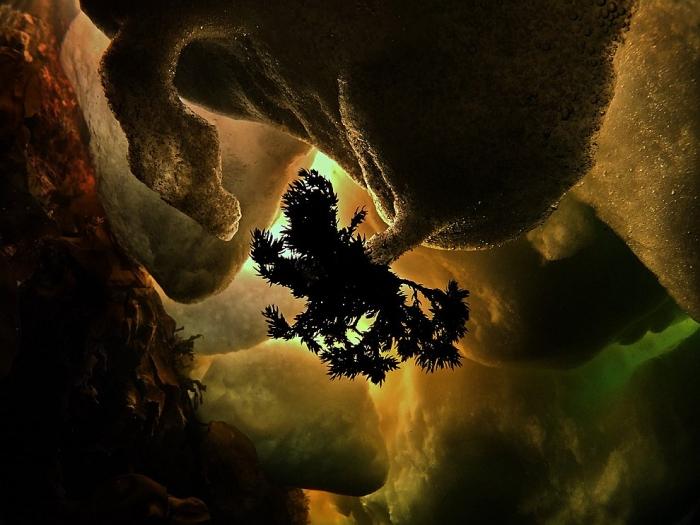 Номинация: «Искусство природы». Автор: Александр Аристархов. Название: Елочное украшение